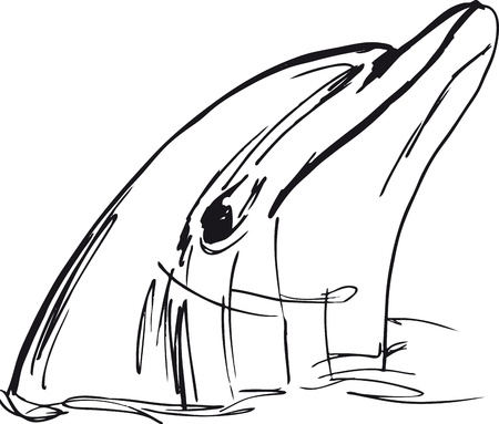 aquaria: Sketch of dolphin face. illustration