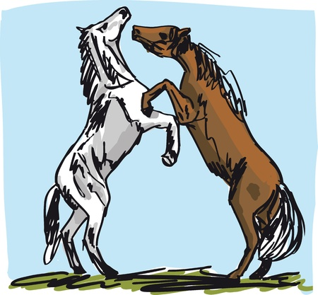 Stallion Sketch. illustration