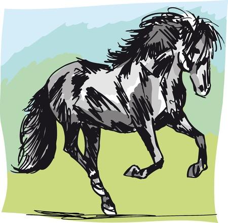 Stallion Sketch. illustration Vector
