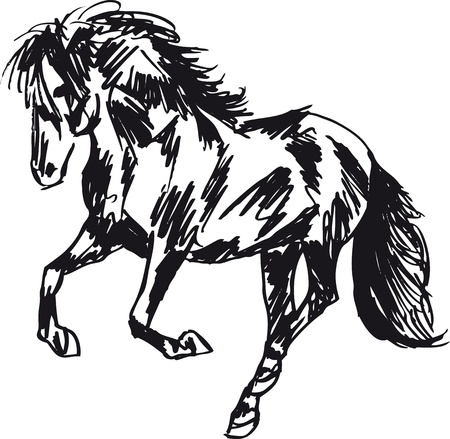 arab spring: Stallion Sketch. illustration
