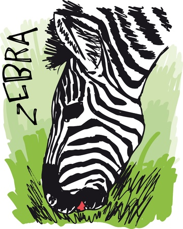 grasslands: Zebra eating grass. illustration