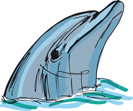 aquaria: Sketch of dolphin face. illustration