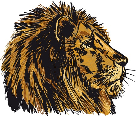 watchful: Sketch of a big male African lion. illustration Illustration