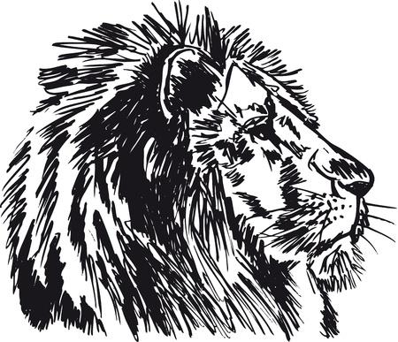 traino: Sketch di un grande leone maschio africano. illustrazione
