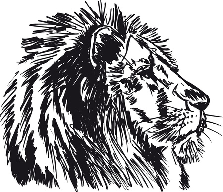 Sketch of a big male African lion. illustration Vector