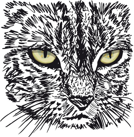 predators: Sketch of curious little cat looking at something on the ground.