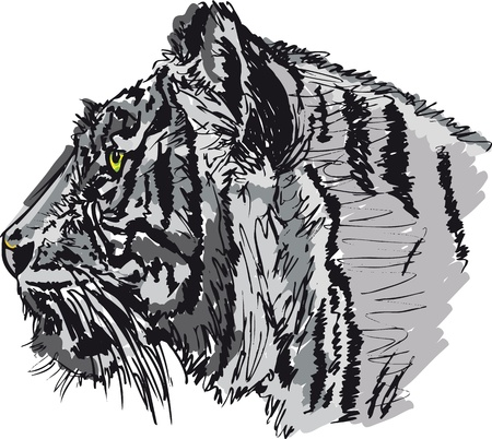 Sketch of white tiger. Vector illustration Vector