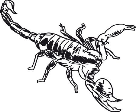erection: Sketch of Scorpion in combat position  Vector illustration