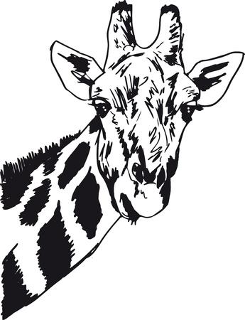 Schets van giraf hoofd Vector illustratie Vector Illustratie