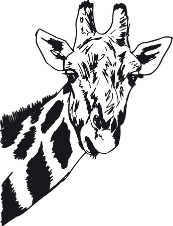 close up face: Sketch of giraffe head  Vector illustration  Illustration