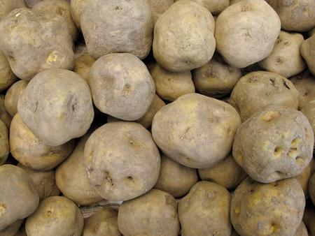russet: Peruvian tuber Stock Photo