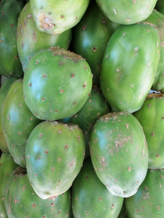 Green prickly pear  photo
