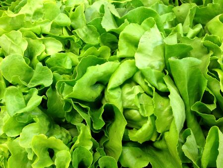 fresh lettuce  photo