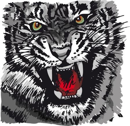 tiger white: Sketch di illustrazione tigre