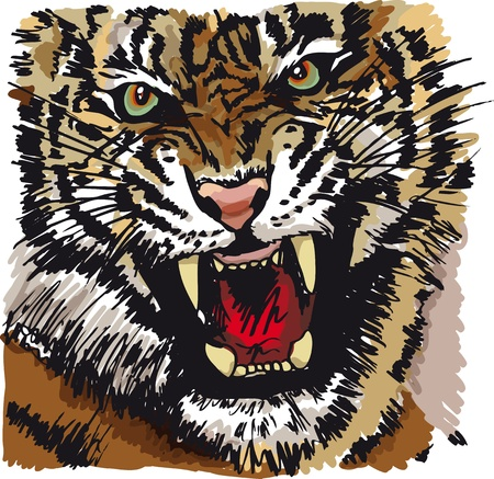 tatouage visage: Esquisse d'illustration du tigre