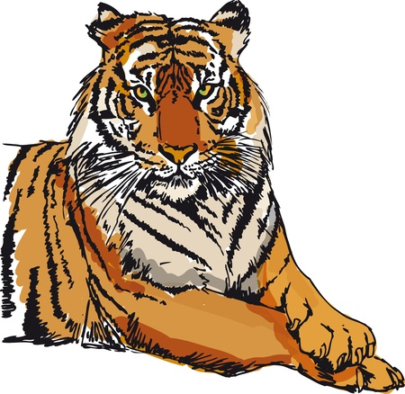 extinction: Sketch of tiger illustration