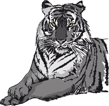 Sketch of tiger illustration  Vector