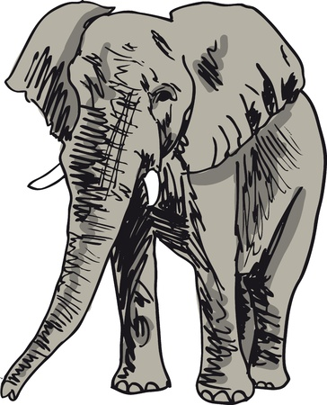 herbivore: Sketch of elephant. Vector illustration
