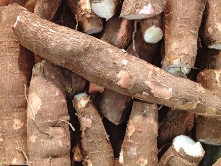 cassava Banque d'images