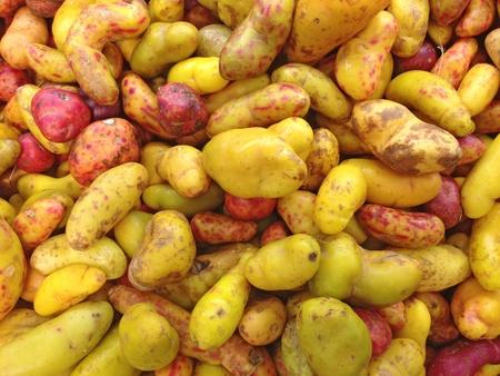 Olluquito. Peruvian tuber photo