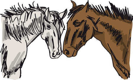 Horse vector illustration Vector