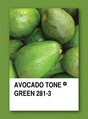 AVOCADO TONE GREEN. Color sample design photo
