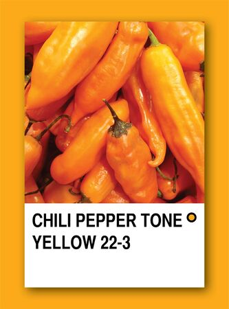 CHILI PEPPER TONE YELLOW. Color sample design photo