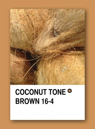 COCONUT TONE BROWN. Color sample design photo
