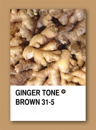GINGER TONE BROWN. Color sample design photo