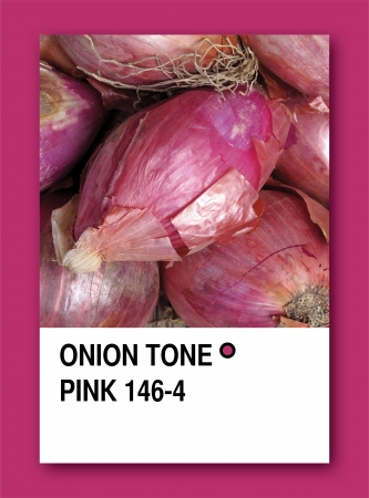 ONION TONE PINK. Color sample design Stock Photo