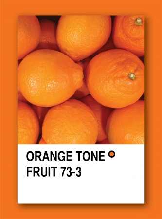 ORANGE TONE FRUIT. Color sample design photo
