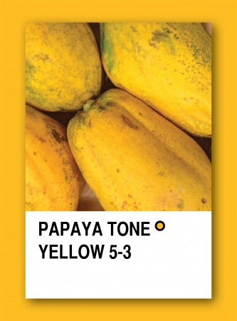 PAPAYA TONE YELLOW. Color sample design photo