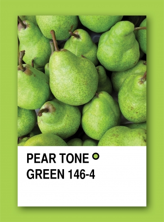 PEAR TONE GREEN. Color sample design Stock Photo - 14457241