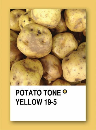 POTATO TONE YELLOW. Color sample design photo