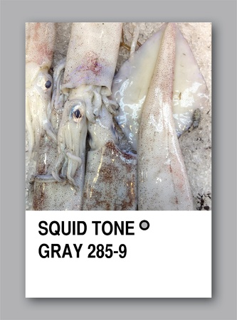 SQUID TONE GRAY. Color sample design Stock Photo - 14457250