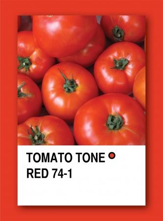 TOMATO TONE RED. Color sample design
