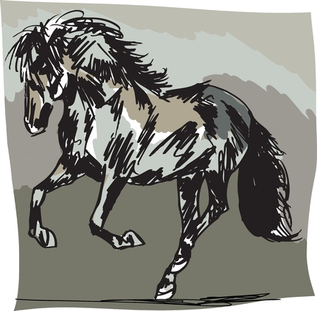 Stallion Sketch Vector