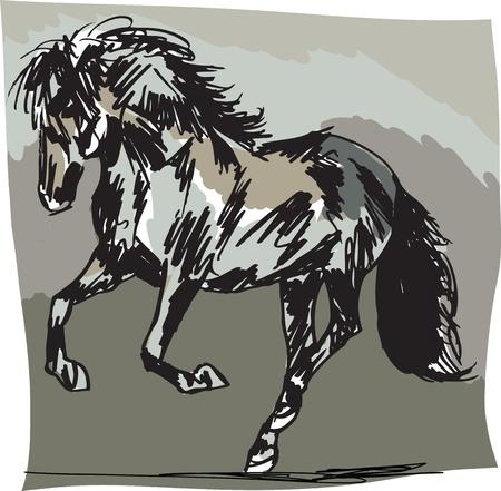 Stallion Sketch Vector