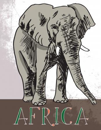 elephant head: Africa