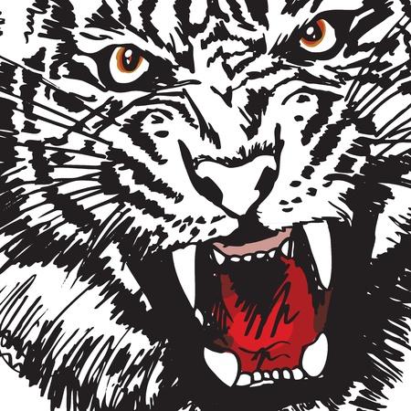 Sketch of tiger Vector