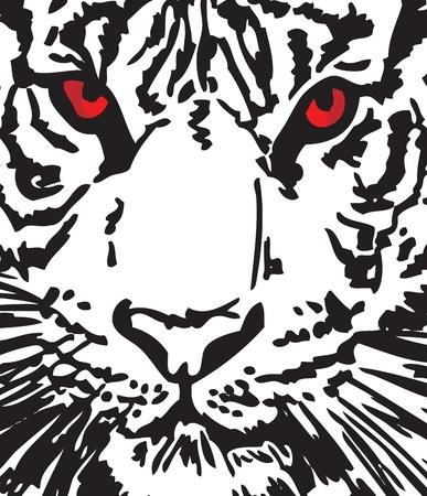 tigre blanc: Croquis de tigre blanc Illustration