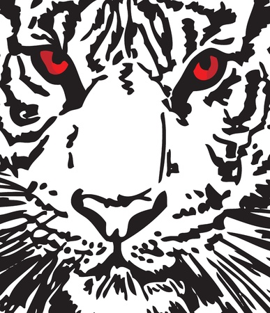 whisker: Sketch of white tiger