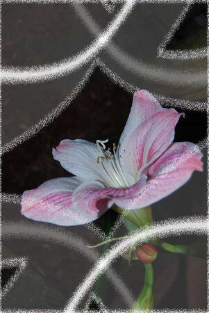 春のめざめ 写真素材