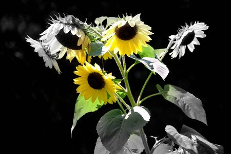 implies: Selective coloring of this black and white shot implies spreading the warmth of the sun.