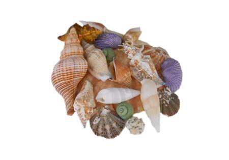 fondo transparente: Sentado en un fondo transparente, de colores, conchas surtidos siempre le recuerda verano