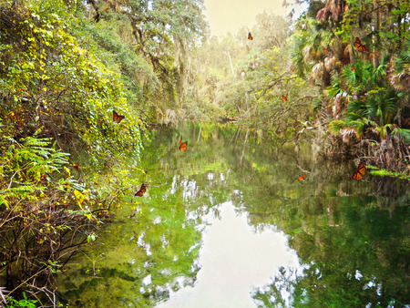 The Hillsborough River in Florida is a place where you can relax and go back in time to old Florida