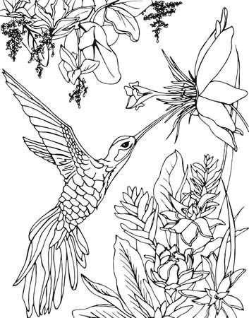 Colibrí Bebiendo Néctar De Una Flor. Un Colibrí Volador Inscrito En ...