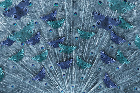 Feathers from a peacock tail with the familiar butterflies, coloured in blue tones