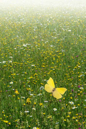 undisturbed: A field of flowers in its blooming height with some butterflies in harmony