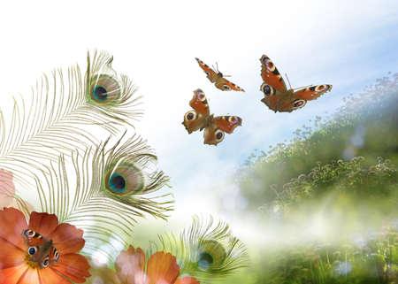 butterflies flying: Composición de la atmósfera de una escena con flores, plumas de pavo real y las mariposas de pavo real desde diferentes ángulos, para darle un aspecto vibrante